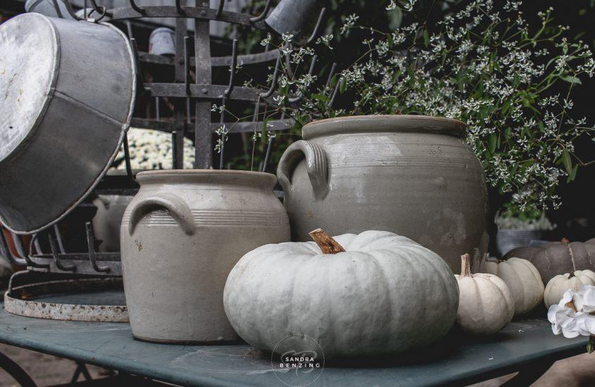 Der Herbst ist da oder letzte Geranien-Impressionen