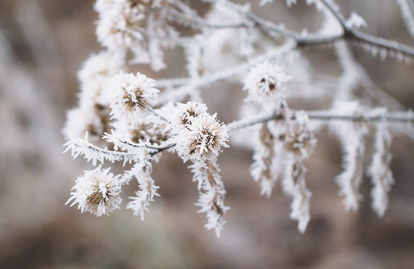 Von den Rauhnächten, einem perfekten Wintermorgen und was glücklich macht