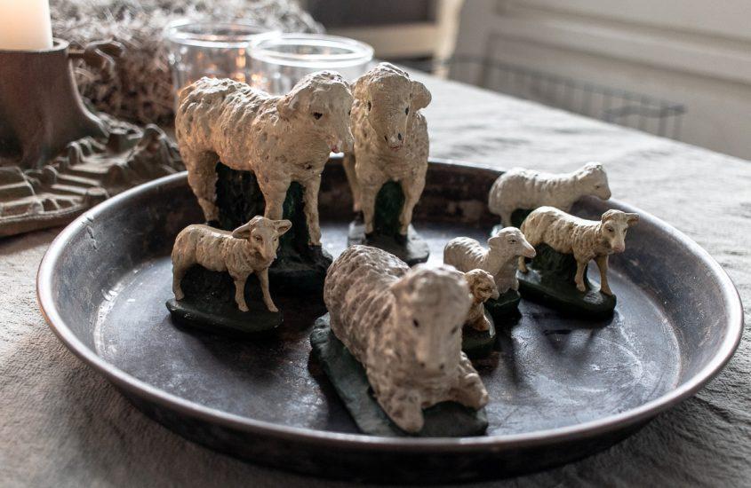 Von Schafen und Schafherden…