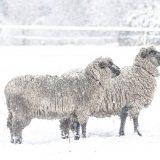 Augusta & Luises 1. Winter auf dem Blumenhof