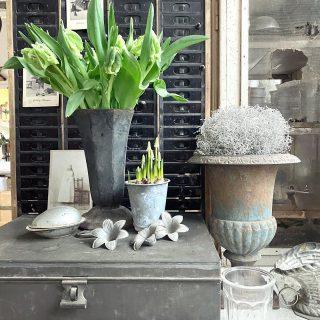 Lust auf Tulpen? JA!! Nachdem es draußen erstens nicht hell wird und zweitens ekelig nasskalt ist, musste ein Arm voll Papageien-Tulpen her. Jetzt geht's mir besser. Auf dem zweiten Bild seht ihr meine Magnolienzweige. Bin gespannt wann sie blühen... Kommt alle gut durch diesen trüben Dienstag! . . . . . #lustauffrühling #papageientulpen #tulipparrot #parottulips #shabbychichomes #shabbychichome #farmhouseliving #unserleben #wohnenmitweiß #countryhomekitchen #landleben #zinclove #brocantelove #whitetulips