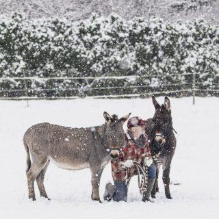 Endlich hat es bei uns auch geschneit! Ich freu mich so. Wir glauben für Fritz & Franz ist es der erste Schnee überhaupt. Jedenfalls sind sie wie die Verrückten heute früh über die Koppel galoppiert.  So viel Lebensfreude tut einfach gut! Mit diesen Bildern wünsche ich euch einen schönen Sonntag Abend! #savethedonkeys #eselliebe #landleben #stayhome #farmhouseliving #unserefarm #fritzundfranz #lebenaufdemland #eselbrüder #wintertraum #unserzuhause #shabbyliving #bauernhofleben