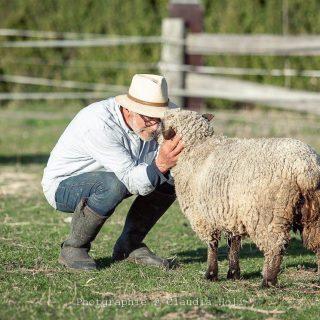 Mein Mann und unsere Schafe. Sie lieben ihn einfach. Als sie zu uns kamen war, vor allem Luise, nicht wirklich zutraulich. Mittlerweile lässt sie sich richtig streicheln.  Mich lieben sie auch. Besonders, wenn ich mit Schäferstolz daher komme. So hat jeder seine Tricks. Morgen gibt es Neuigkeiten. Ihr könnt gespannt sein... Danke an @daughters_and_dogs, die diesen besonderen Moment eingefangen hat. . . . . . . #sheepofinstagram #schäfchenliebe #schafliebe #unserekleinefarm #unserleben #unserlebenaufdemland #farmliving #farmhouselife #wirliebentiere #shropshiresheep #shropshireschafe #augustaluise #frühling2021 #shabbyfarmhouse #shabbyfarm #bauernhofliebe