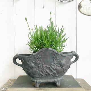 Eigentlich wollte ich heute meinen weißen Lavendel pflanzen. Aber es regnete ohne Unterlass... also dann vielleicht morgen...dieses Wetter macht mir so gar keinen Spaß. Ich weiß, der Boden braucht es, aber diese Kälte ist einfach nur nervig... . . . . . . #aromawhite #hitcotewhite #hochbeetliebe #shabbyfarmhouse #shabbyfarmhousechic #farmhouselove #witwonen #frenchnordicstyle #weisserlavendel #jardiniere #oldjardiniere #wieesmirgefällt #blumenhofbenzing #brocantelover #brocantelove #lavendulaangustifolia #lavendulaangustifoliahidcote #ilovewhiteflowers